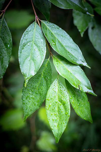 Moist Leaves