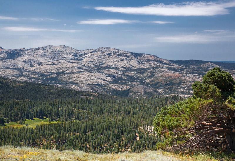Ellis Peak Trail