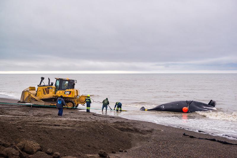 Utqiagvik Whaling-6104565-Juno Kim-nw.jpg