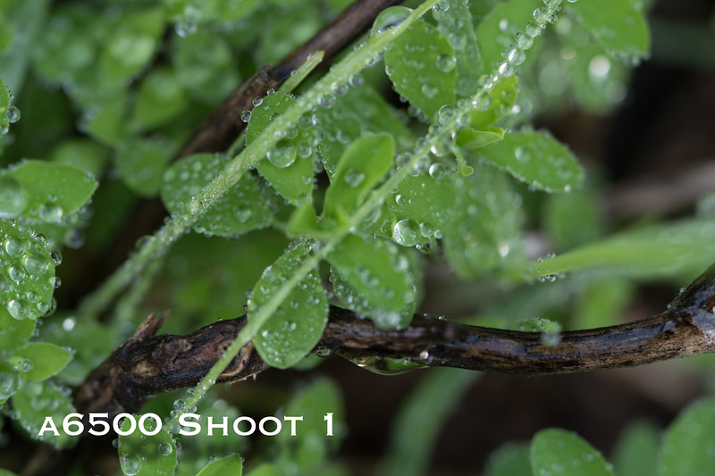 a6500 macro - Shoot 1-22.jpg