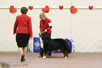 Amateur Owner Handler Dogs