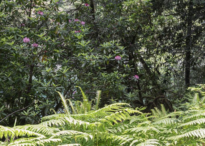 redwoodsFin-1005.jpg