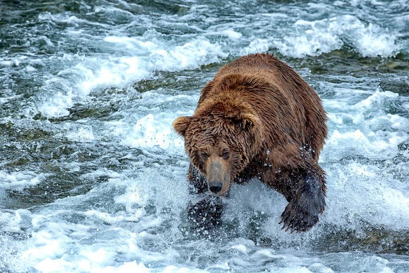 Alaska_2014_FH0T7624.jpg