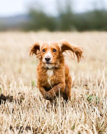 Dog Portrait Shoot - Carolyn Tyer