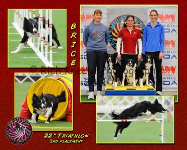 Dog Agility 2011