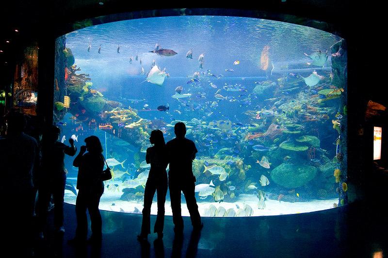 40,000 gallon fish tank
