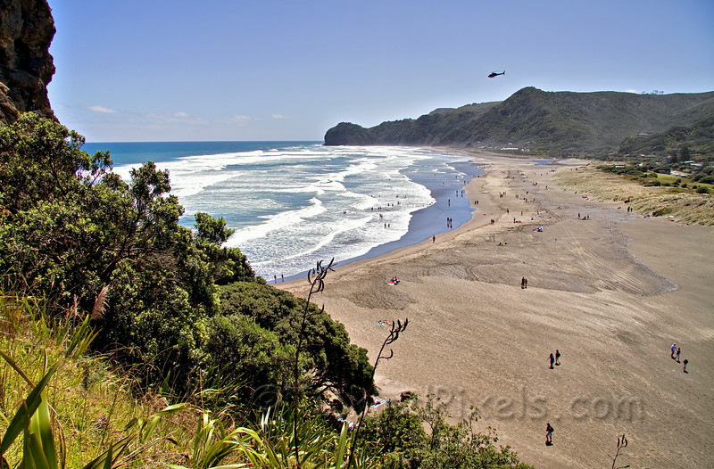 North Piha Beach from Lion Rock