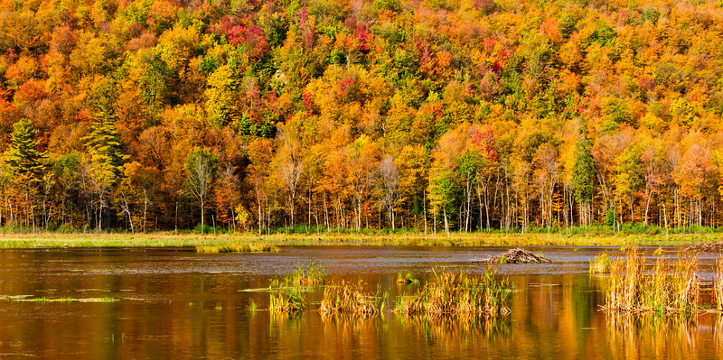 Autumn colours-Gatineau Hills_sept 29-10_01-2.jpg