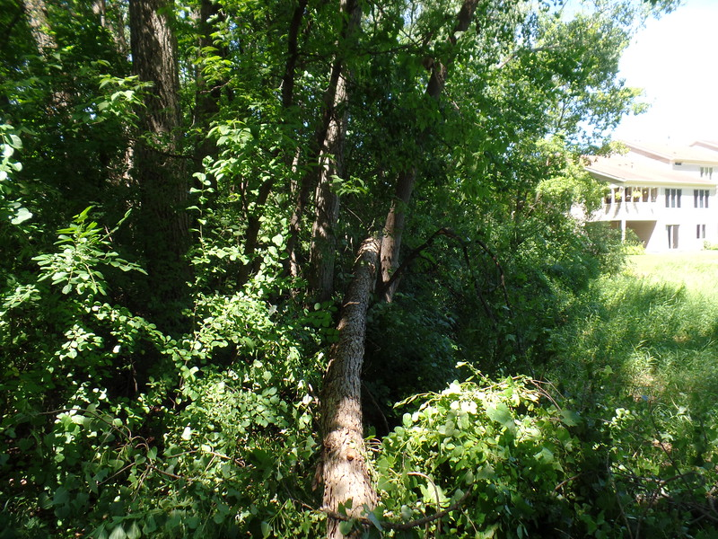 Tree over Earley Lake park path