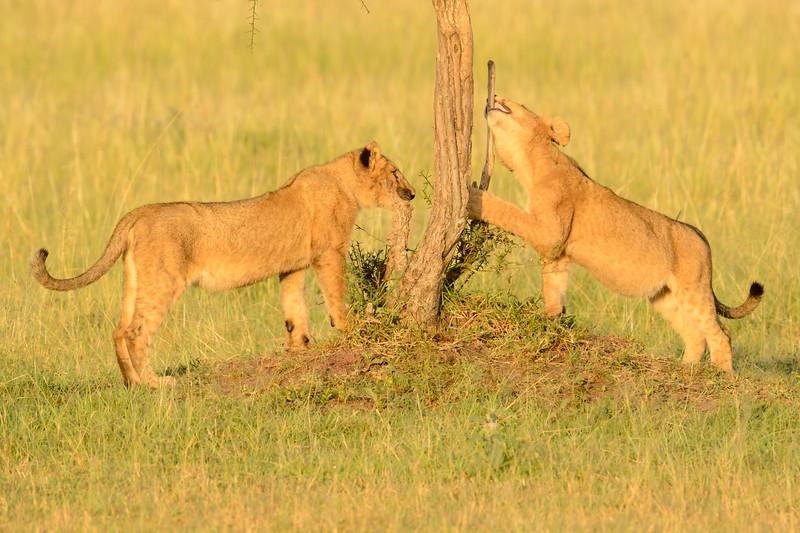 20160215__KET7654_Serengeti_Day_7.jpg