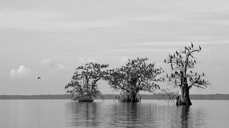 Cypress_Swamps_1117_PSokol-2071-Edit.jpg