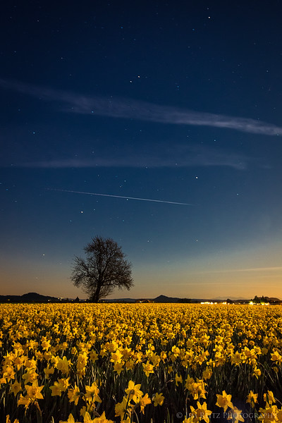 Yellow Night