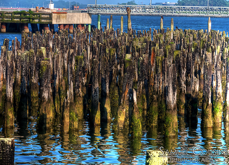 The old piles from a pier that burned a long time ago.