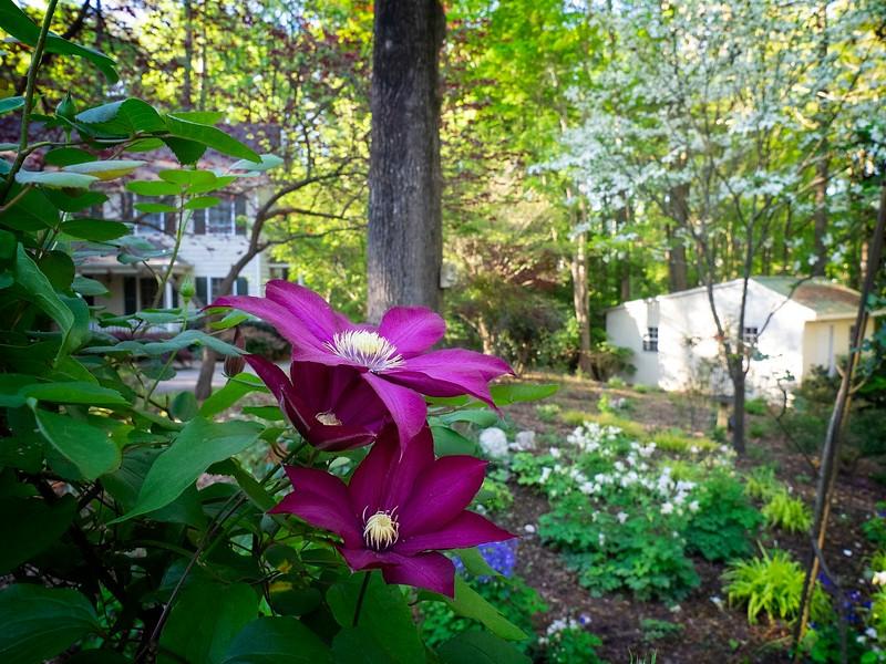 Garden_apr16-4170017 copy.jpg