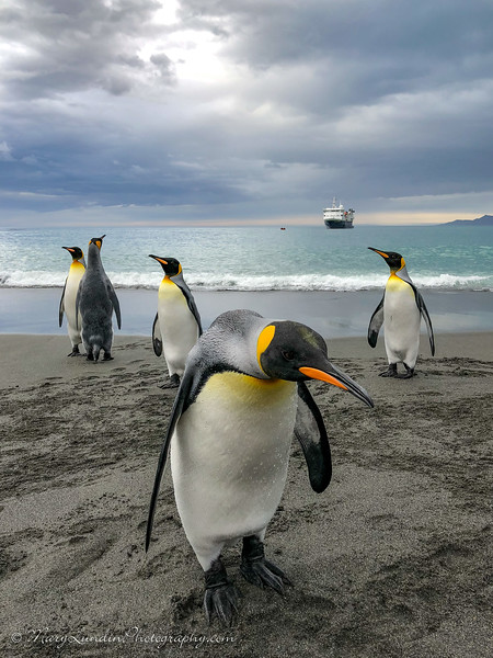 Antarctic-157
