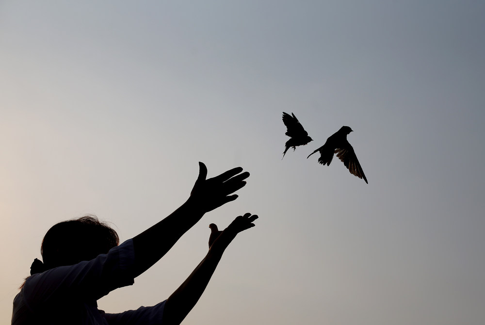 Description of . A woman releases sparrows as an offering to mourn Cambodia's former King Norodom Sihanouk in Phnom Penh, Monday, Feb. 4, 2013. Sihanouk's body had been lying in state at the Royal Palace after being flown from Beijing where he died Oct. 15 of a heart attack at the age of 89. The cremation, the climax of seven days of mourning, will take place Monday. (AP Photo/Wong Maye-E)