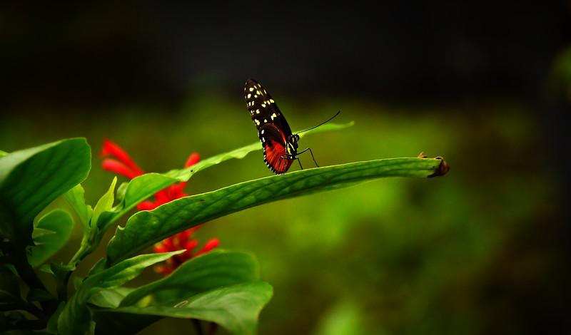 Butterfly-035.jpg