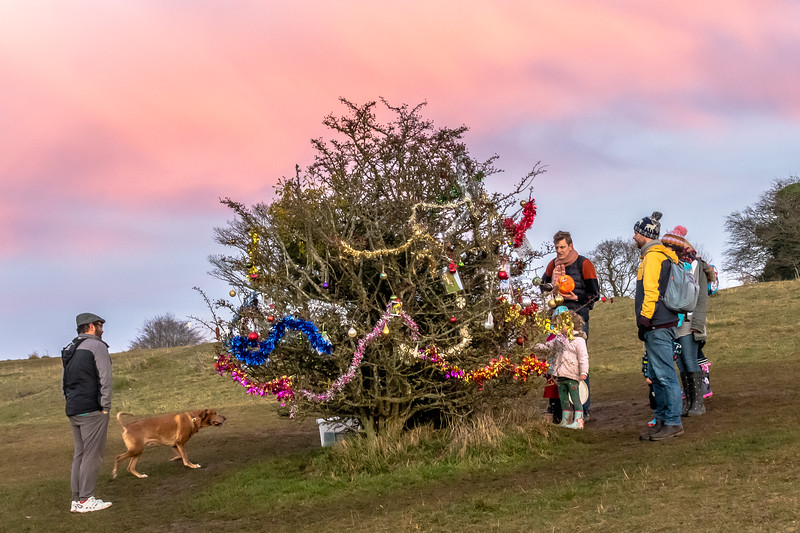 Dog's Christmas Tree-7838.jpg