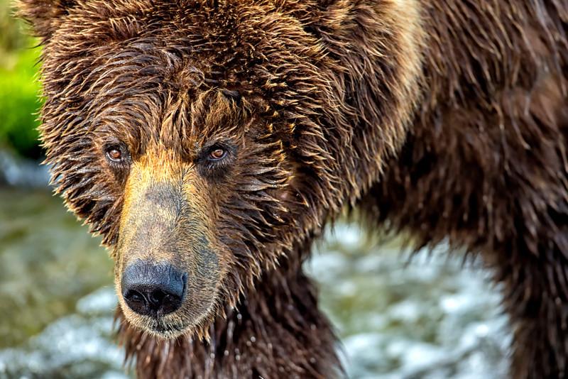 Alaska_2013_FH0T9589.jpg