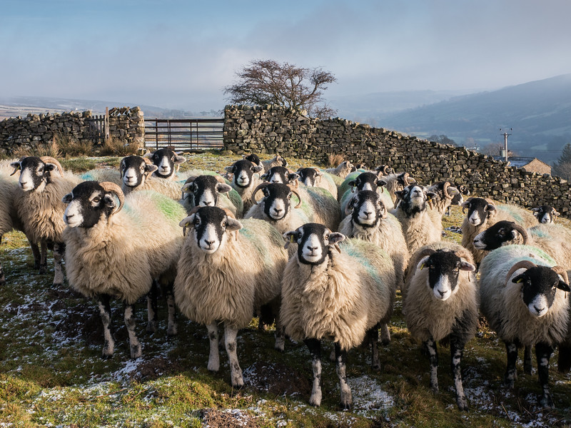 Swaledale - 'where's my lunch?'