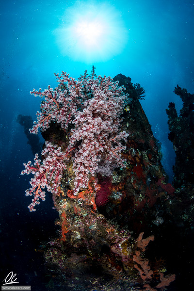 Soft coral bouquet