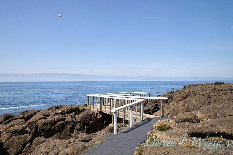 Whale Cove whale watch platform_9453.jpg