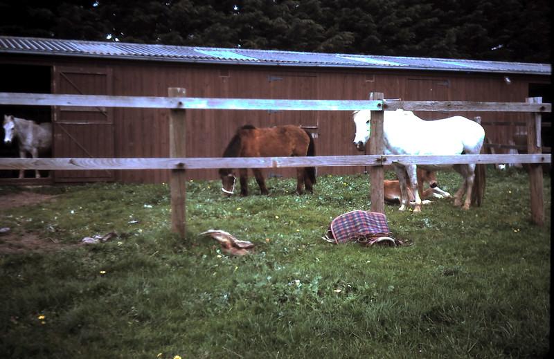 1977-8 (9) Blue Lady & foall.JPG