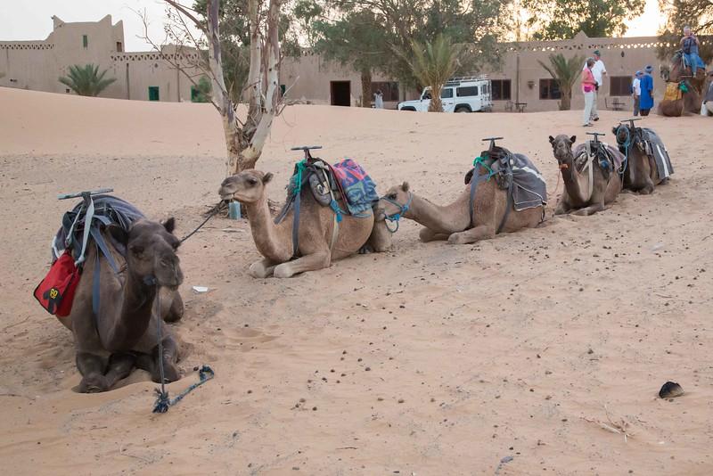 160924-130039-Morocco-0132.jpg
