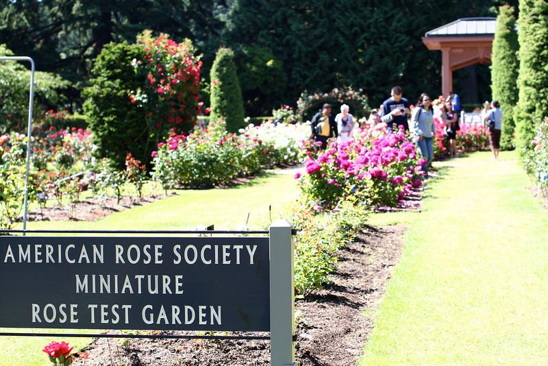 Portland International Rose Test Garden  2229.jpg