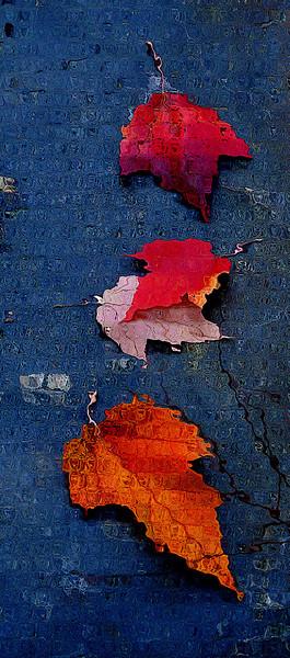 canvas 11-24-2011.jpg