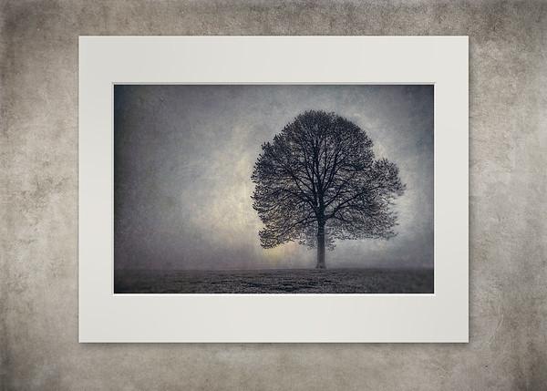Tree of Life - $20
