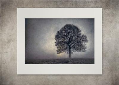 Tree of Life - $12