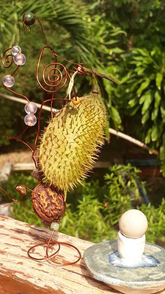 कुबेराक्षी = Kuberakshi, or Yellow Nicker