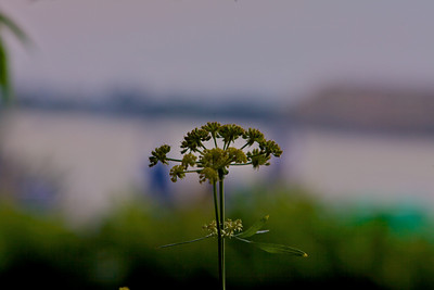 Flowers - Greens