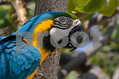 Day 7 - Oranjestad, Aruba