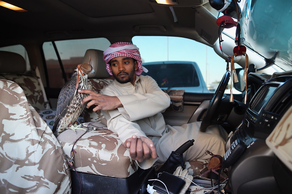. A falcon sits on the arm rest of a mans 4X4 on February 3, 2015 in Abu Dhabi, United Arab Emirates. (Photo by Dan Kitwood/Getty Images)