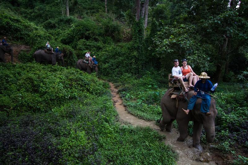 Thailand - Chiang Dao elephant training center 3380.jpg