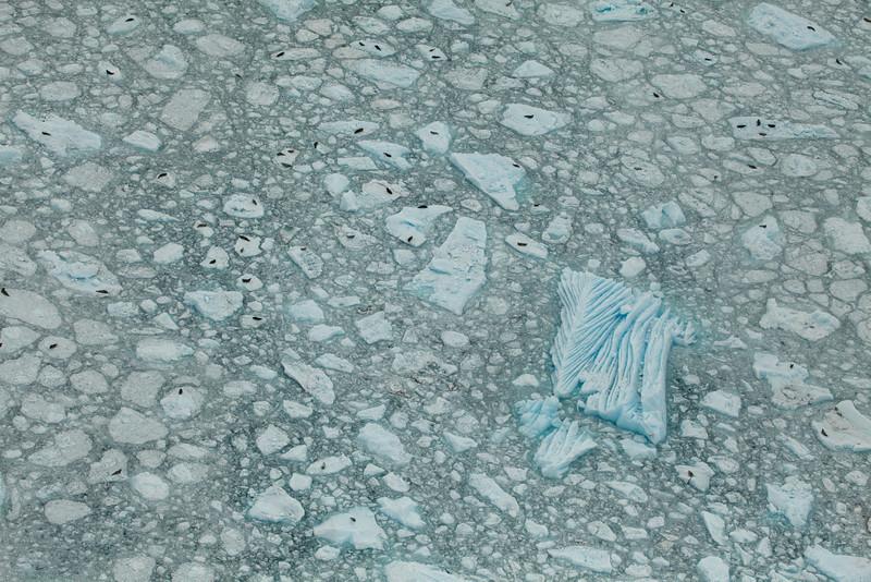 Alaska Icy Bay-3922.jpg