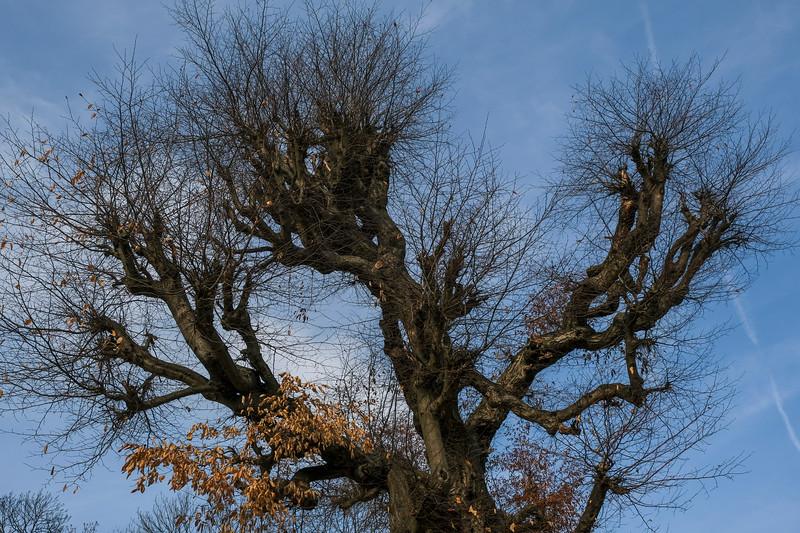 brevnov stromy-010.jpg
