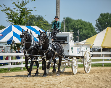 Men's Team Percherons