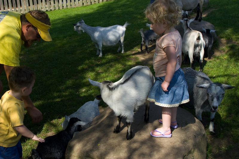 Beverly with the baby goats