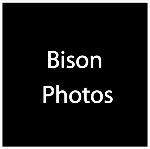 Bison Photos.png