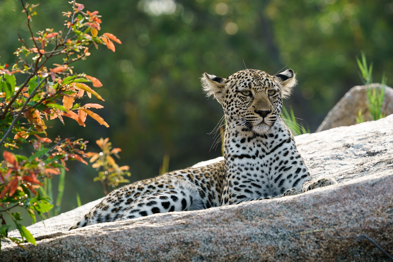 LeopardHills-20171024-1843.jpg