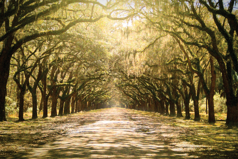 TreesforMomma_CMYK.jpg