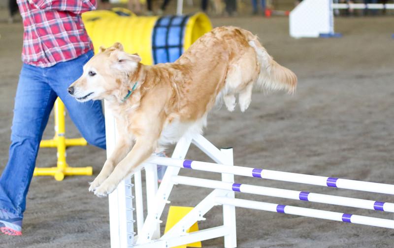 3-15-2015 Bloodhound-1546.jpg