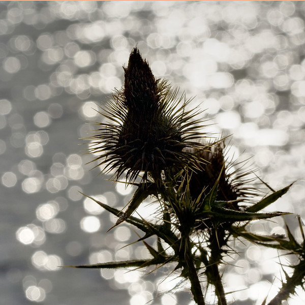 Gotland 20110608_0056.jpg