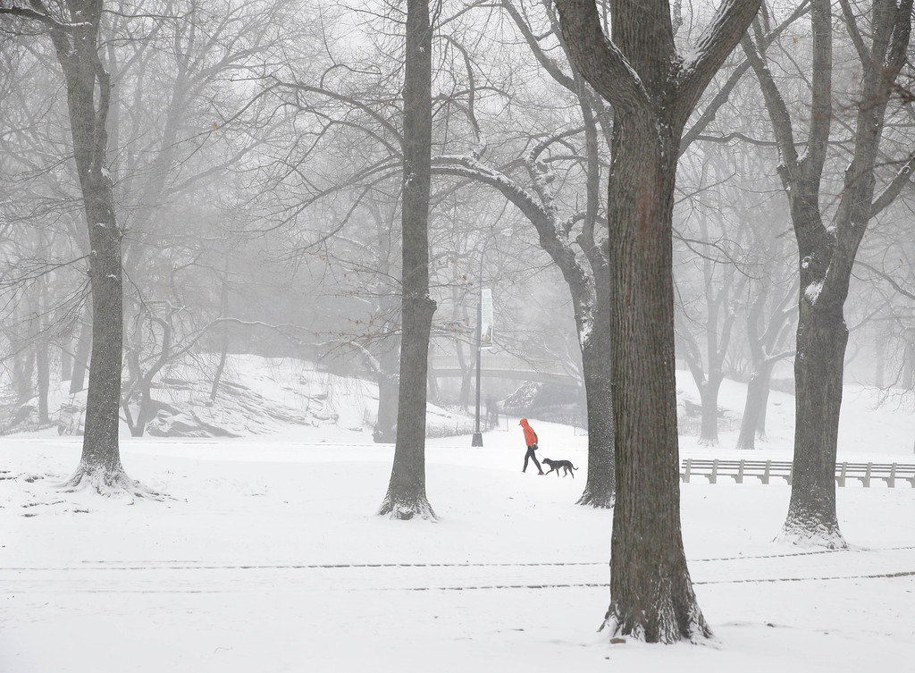. A person walks a dog through snowy Central Park in the Manhattan borough of New York, Tuesday, Jan. 21, 2014.   (AP Photo/Seth Wenig)