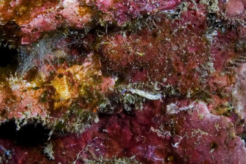 Nudibranch 3.jpg