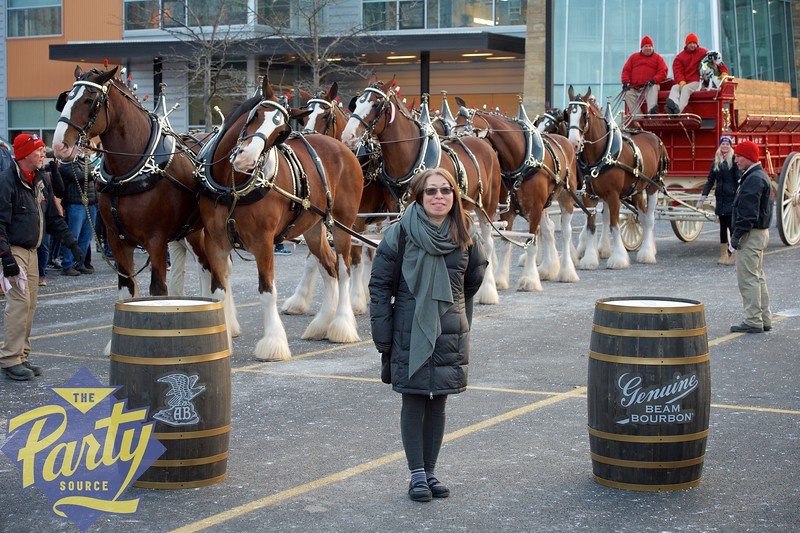 Clydesdale Portraits 264.jpg