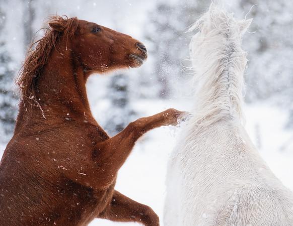Horses: Wild & Working